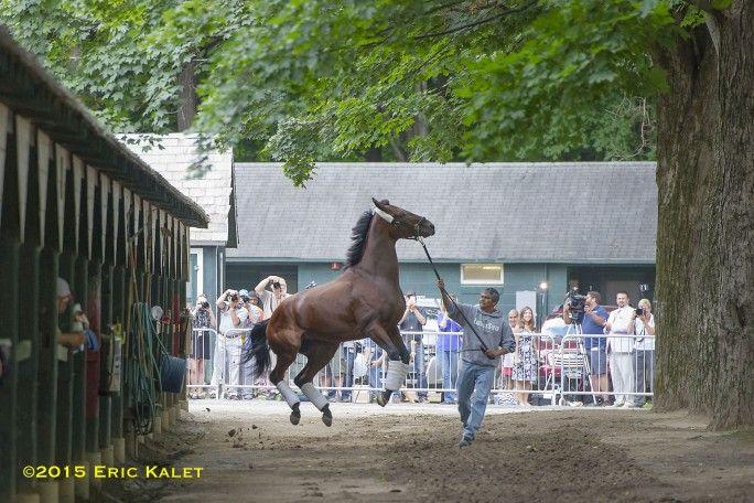 The Pharoah Has Landed: Triple Crown Winner Arrives At Saratoga - Horse Racing News | Paulick Report