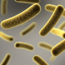 Learn To Love Your Microbes.