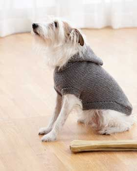 Dog Knit Hooded Coat ~ sizes S to XL ~ FREE - KNIT ~ doesn't he look adorable in his new coat!