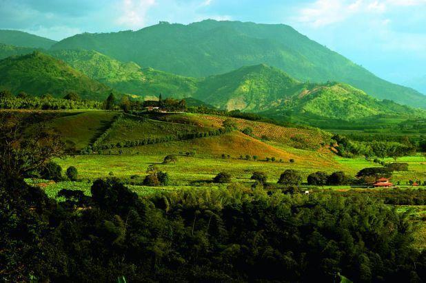 Coffee region  Armenia, Colombia  (Hacienda Bambusa)