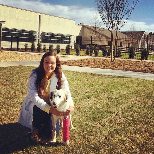 """""""Dawg,"""" a 3-year-old English setter mix, came into the hospital two weeks ago after being hit by a car. She was diagnosed with a left radius and ulna fracture. Her fracture repair was the first surgery performed in our new facility. She has since returned for her first bandage change and is doing excellent!"""