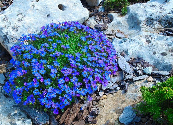 perennial rock garden 3