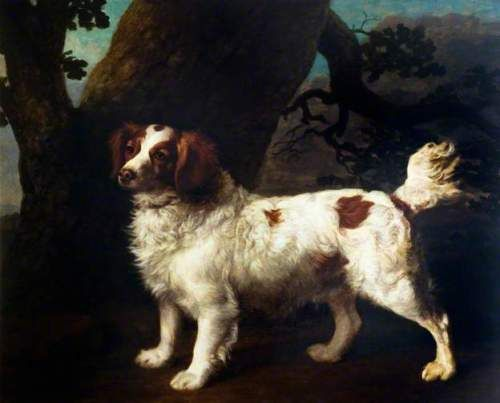 Red and white water spaniel by George Stubbs, circa 1790. Clumber/ Welsh/ English/ Norfolk spaniel type.