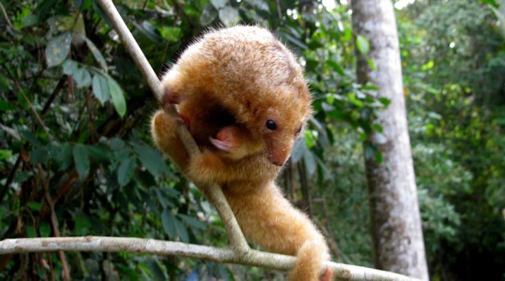 Parque Nacional Natural Paramillo  Parques Nacionales Naturales de Colombia  la gran bestia