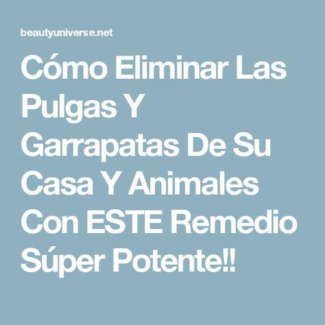 Cómo Eliminar Las Pulgas Y Garrapatas De Su Casa Y Animales Con ESTE Remedio Súper Potente!!