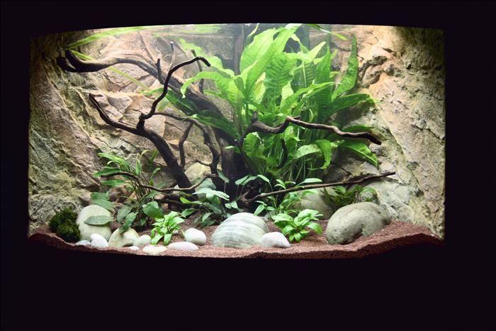 Aquariums - Achterwanden en rotsdecor | Megavijvercenter - Vijver en Aquarium