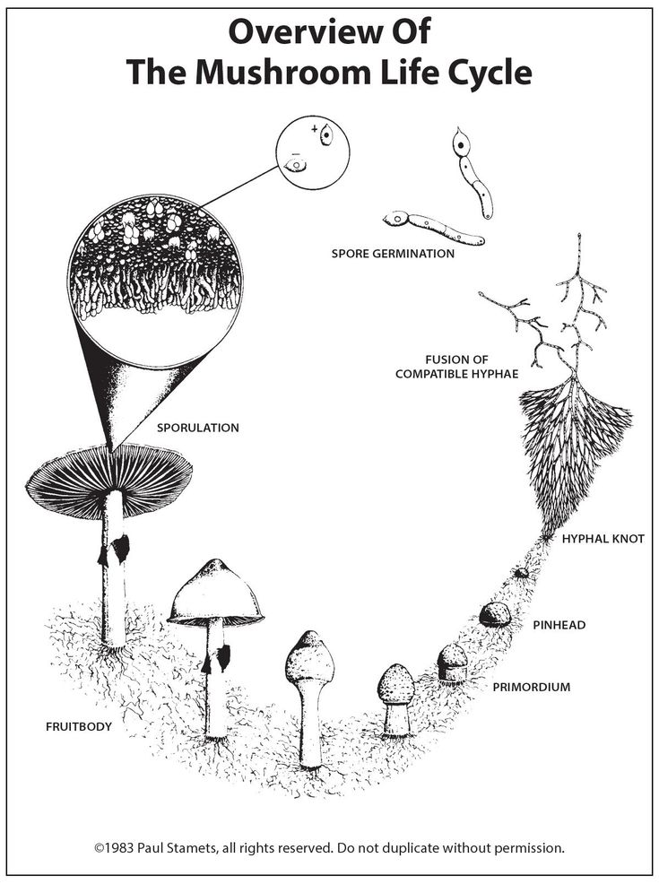 A Pictorial Overview Of The Mushroom Life Cycle Life Cycles Stuffed Mushrooms Different Art Styles
