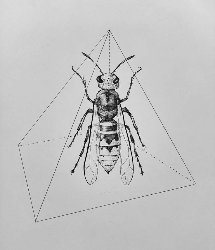 #hornet #insect #fire #drawing #illustration #animal #geometric #triangle
