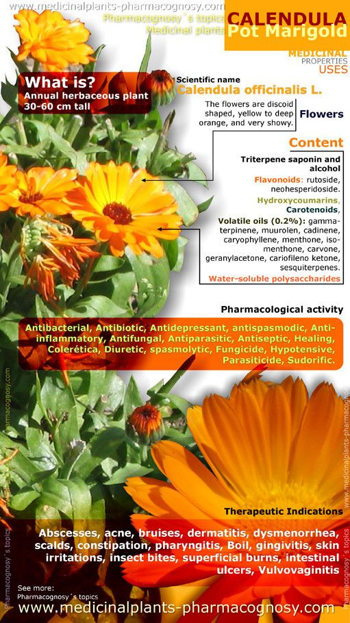 Calendula officinalis health benefits. Infographic. Summary of the general characteristics of the Calendula officinalis plant. Medicinal properties, benefits and uses more common of Pot marigold flowers. http://www.medicinalplants-pharmacognosy.com/herbs-medicinal-plants/calendula-pot-marigold/health-properties-infographic/