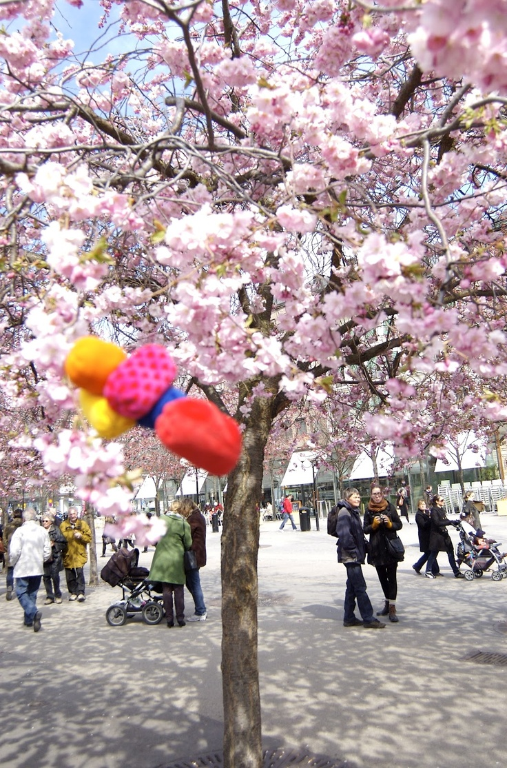 Kungsträdgården, the best Cherry Blossom viewing in Stockholm right now! Spring is in the air! :)