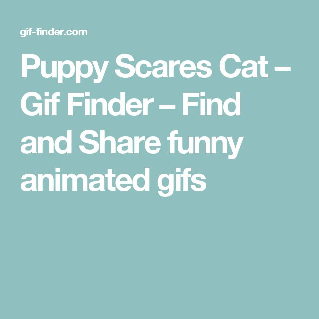 Puppy Scares Cat – Gif Finder – Find and Share funny animated gifs