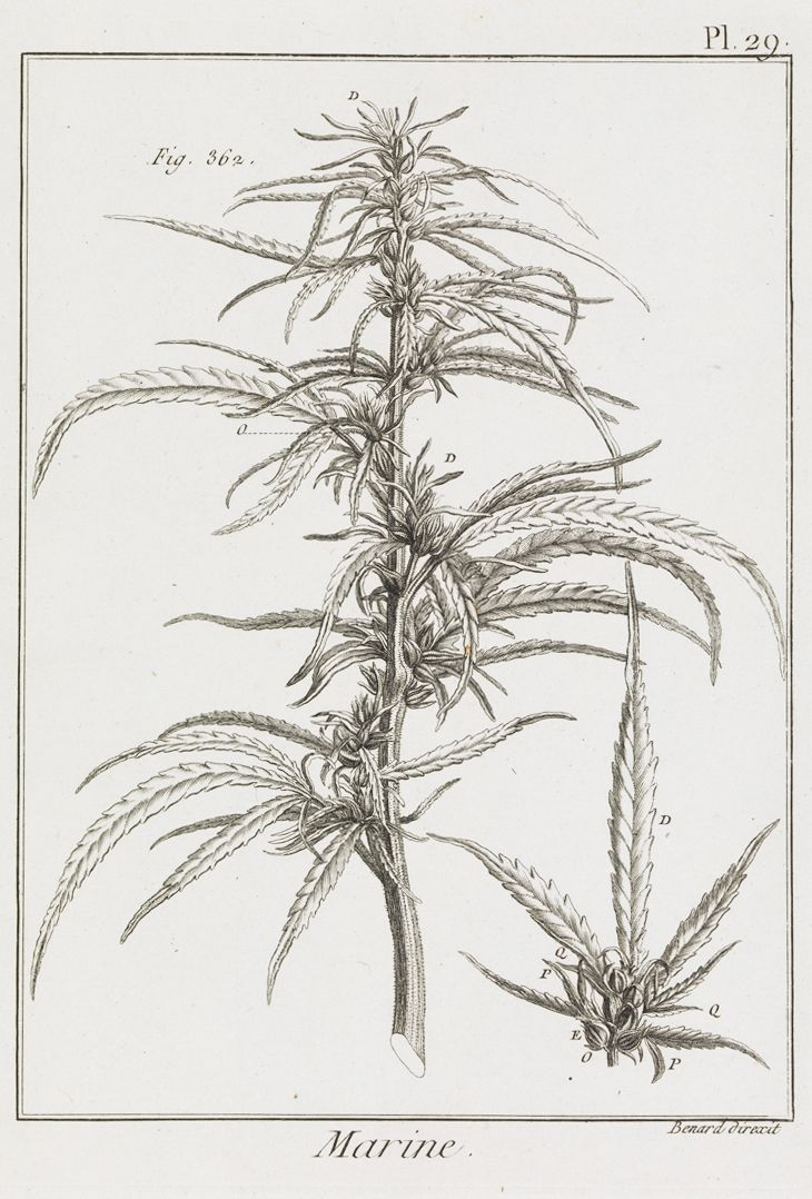 Check Out These Beautiful Ads... For Heroin, Weed And ... |Weed Plant Drawings