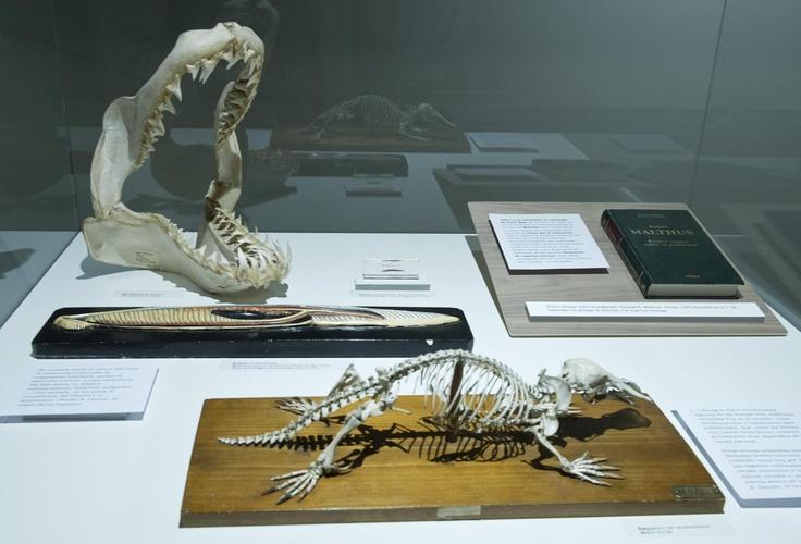 Restos fósiles de animales.