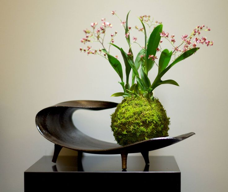 kokedama kokedama pinterest plantes bonsa et orchid es. Black Bedroom Furniture Sets. Home Design Ideas