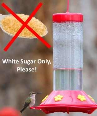 Easy hummingbird food recipe, why not to use red dye, honey, raw sugar, agave nectar, corn syrup, etc. in your nectar recipe and hummingbird feeder tips.