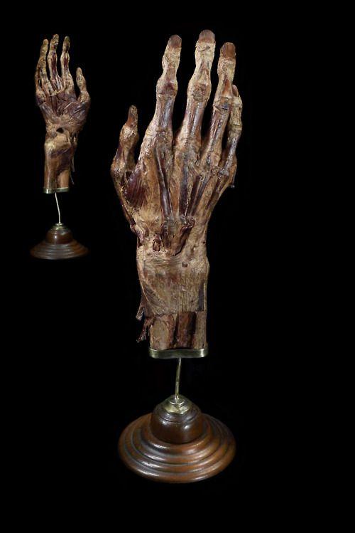 Mummified Human Hand. Mounted by Ryan Matthew. Photo by Sergio Royzen.