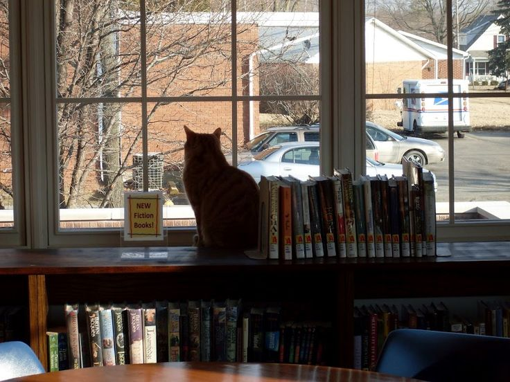 Tober is the Thorntown Library cat, a real life little library lion. And he has his own blog. We heart him.