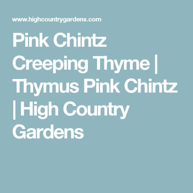 Pink Chintz Creeping Thyme | Thymus Pink Chintz | High Country Gardens