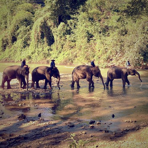 THAILAND Elephants, Chiang Mai, Thailand My love for elephants is endless. Looking