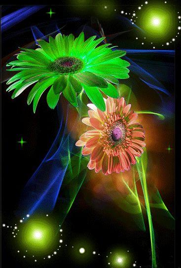 MIS FLORES: Flowers Gallery