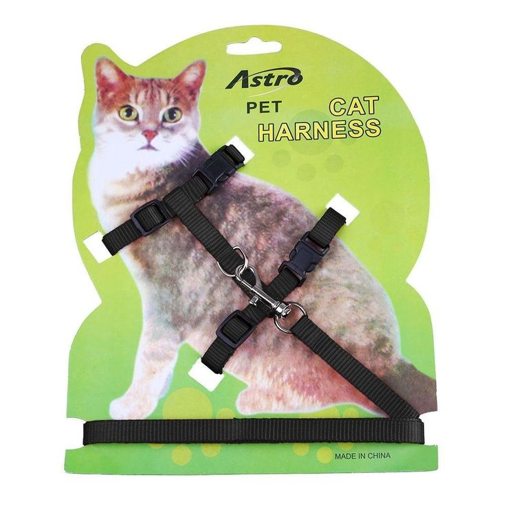 Pet Cat Lead Leash Halter Harness Kitten Nylon Strap Belt Safety Rope Adjustable Cat Dog Collar *** Click image to review more details. (This is an affiliate link and I receive a commission for the sales)