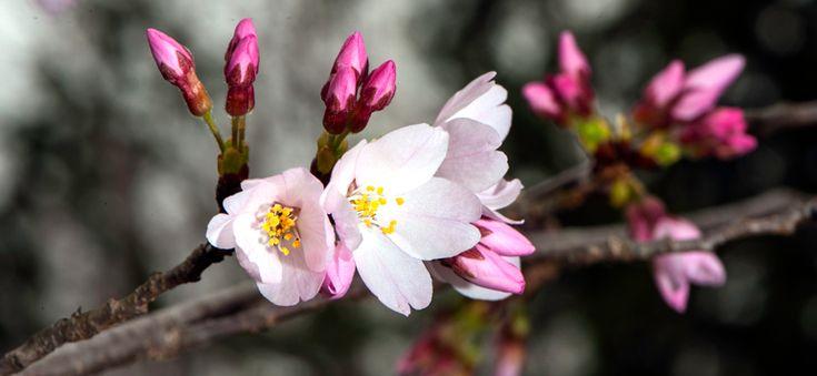 Ευτυχία είναι όλα τα καινούρια φύλλα, χόρτα, μπουμπούκια και λουλούδια που χαρίζει πλούσια η άνοιξη.