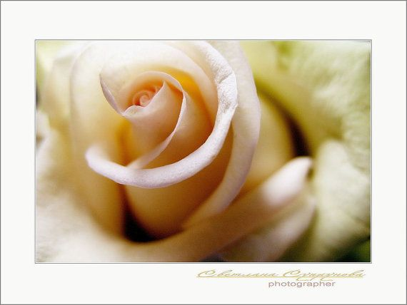 HEART of ROSES ... avtor picture picture for an от PositiveWorlds, $50.00