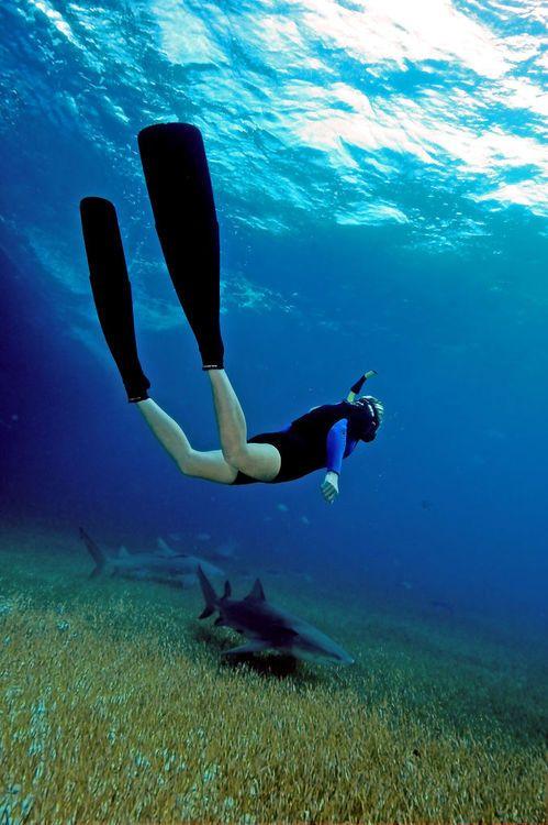 Jackie And Lemon Sharks By ScottS101