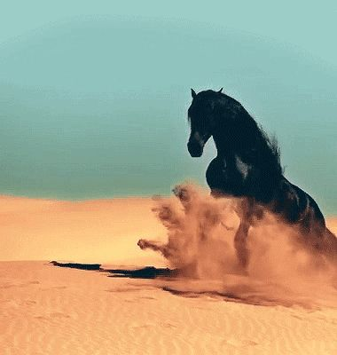 Awesome! Magnificent, mighty Black Stallion in the desert. Like the Black Stallion books!