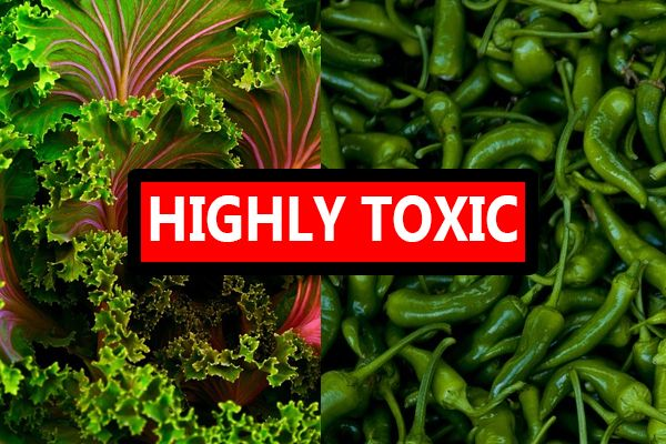 "Two Vegetables Reported ""Extraordinarily Toxic"" Yet Not a Part of the New ""Dirty Dozen"" 