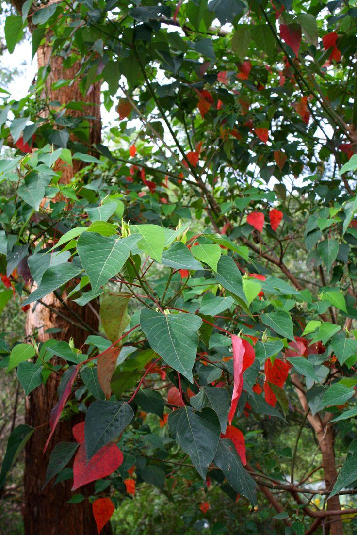 best 25 rainforest plants ideas on pinterest plants of the