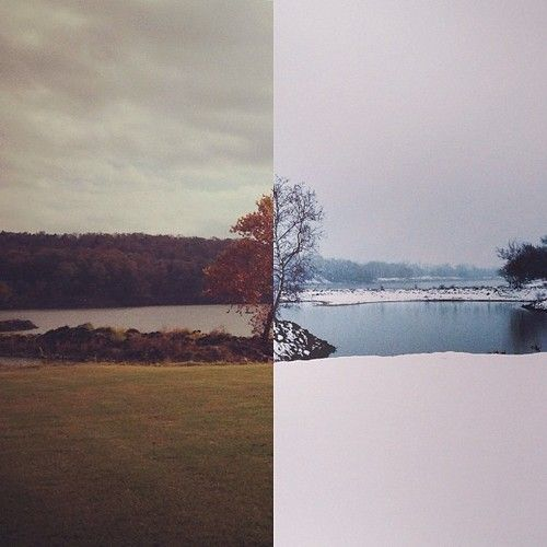 """And now for something completely different:  """"FALL / WINTER"""" (same tree, different season edition) This is my first diptic in at least a year. I most definitely hesitated posting this in fear of defiling my purist feed. #seasons #fall #winter"""