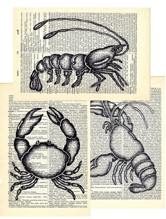 1000 images about Beach Crabs