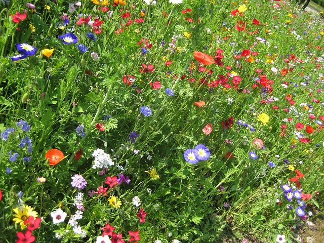Look at the wildflowers...