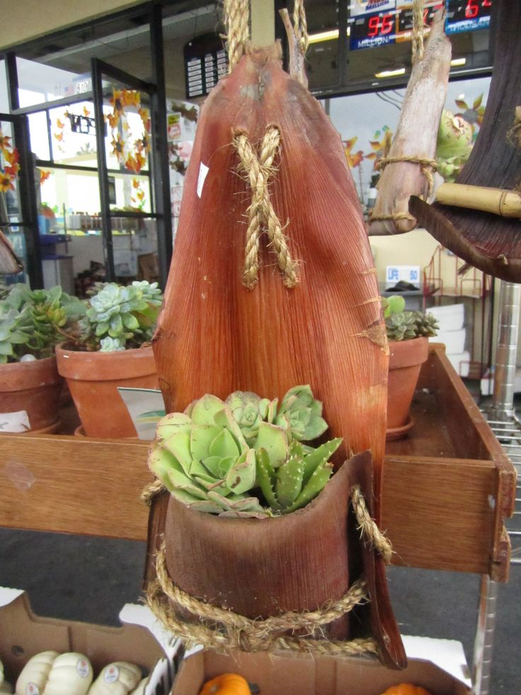 King Palm fronds made into planters. | Container Gardening ...