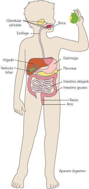 Mis Actividades de Primaria: La alimentación como parte de la nutrición, Bloque 1, Tema 2, Ciencias Naturales, Tercer Grado.