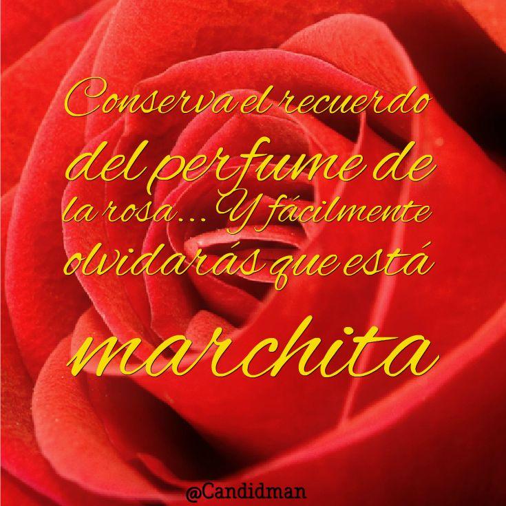 el perfume de la rosa