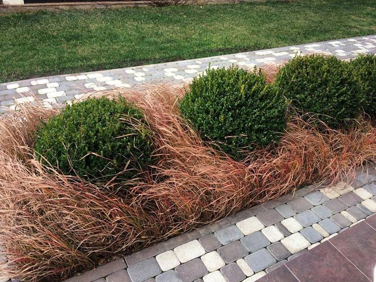 buxusball, buxus, imperata, design, landscapedesign, red, nature