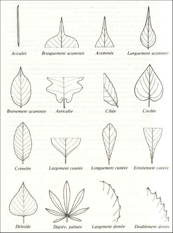 Populaire 10 best Arbres images on Pinterest | Botany, Herb box and Nature study YR53