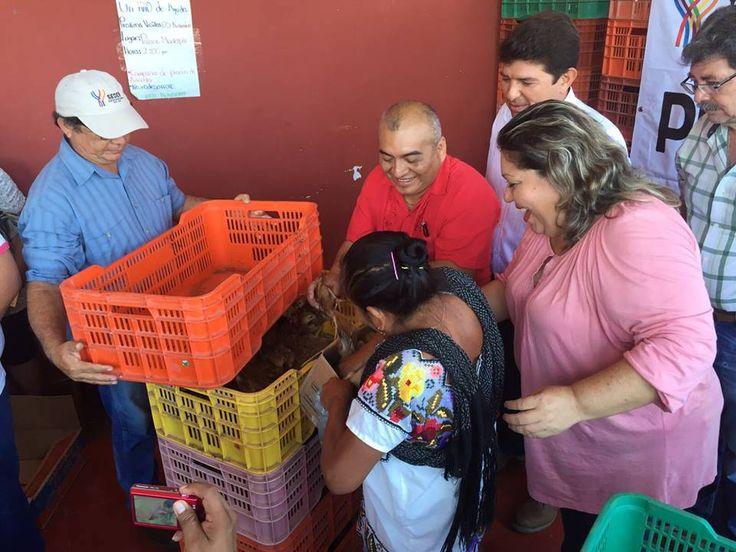 ENTREGAN AVES DE TRASPATIO A 687 FAMILIAS DE TEKOM