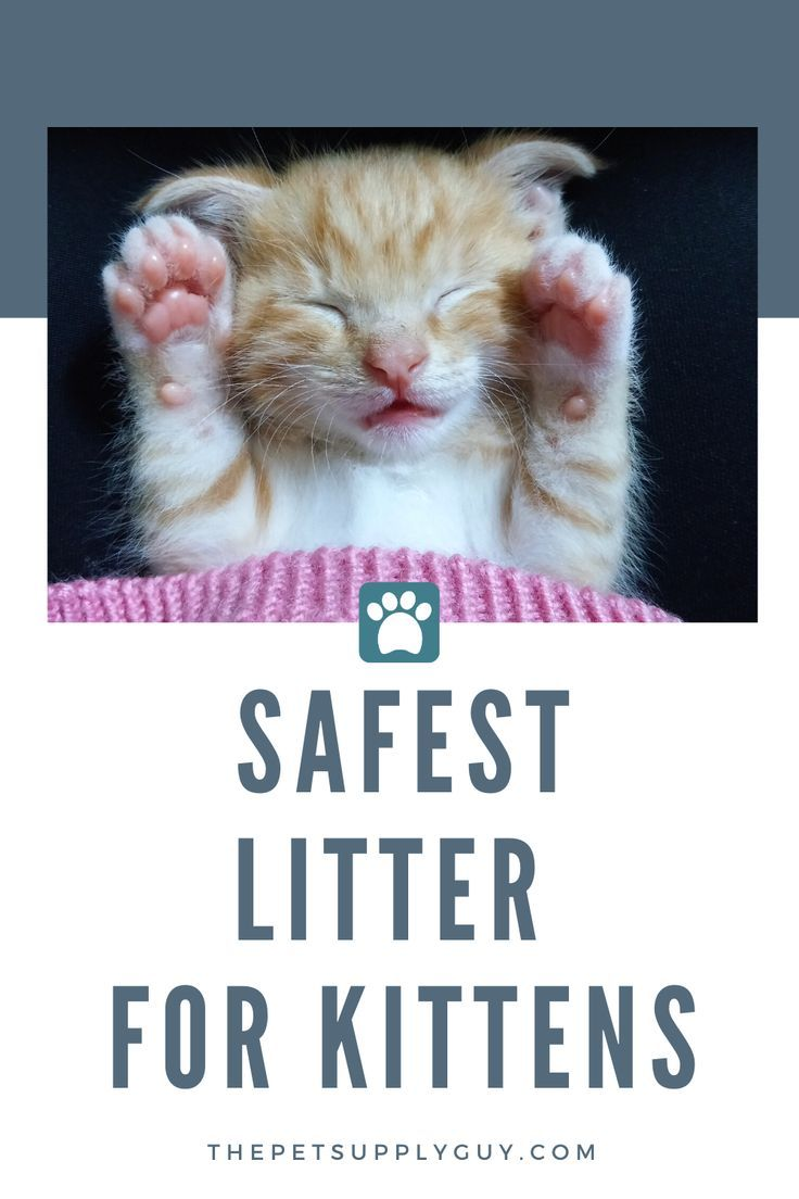 Best Litter For Training Kittens In 2020 Best Litter For Kittens Litter Training Kittens Kittens
