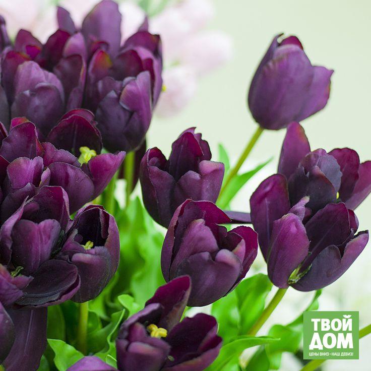 Черный тюльпан - харлемский, темно-фиолетового цвета - венец триумфа селекционеров, который появился в конце 17 века.  В ТК «Твой Дом» представлены темно-фиолетовые тюльпаны как живые, так и искусственные. И оба вида смотрятся очень эффектно!