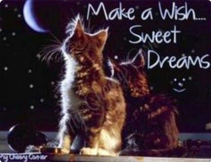 50 Best Images About Sweet Dreams On Pinterest