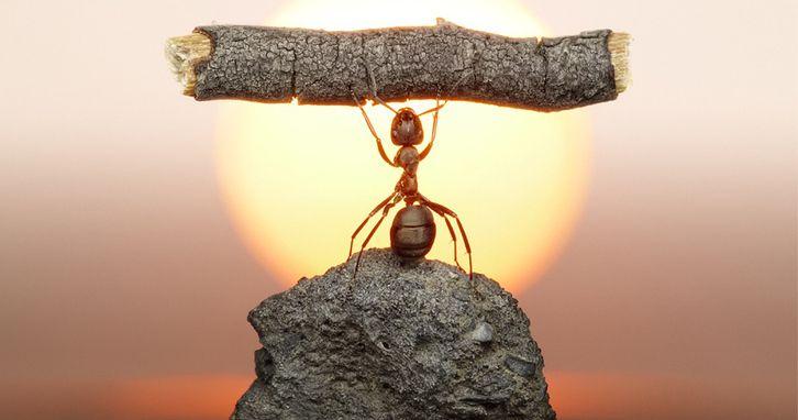 Vie des fourmis immortalisée - Ant life immortalized #ant #AndreyPavlov  #photography #photo #russian #photo #photographie #photographer #photography #photographe #OlivierOrtion #wildlifephotography