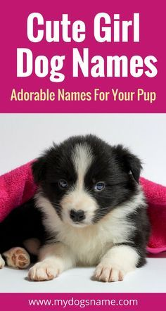 The ultimate list of cute girl dog names! You don't want to miss these adorable ideas.