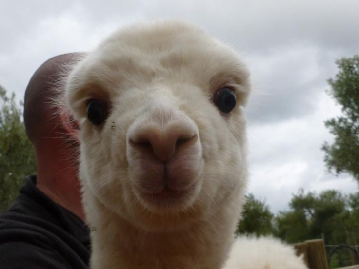 Twitter / AlpacaBook: You had me at 'Hello' #alpacabook ...