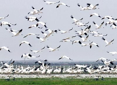 #Bharatpur, a secure braced city is today well known for the close-by Keoladeo #Ghana Bird #Sanctuary. When the shooting protect of sovereignty, it is maybe the most marvelous water-winged animal asylum in #India.