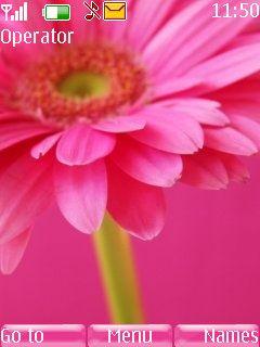 pink petals 2700 classic,2720 Fold ,2730 Classic ,3600 Slide ,3600 Slide ,3610 Fold ,3720 Classic ,5000 ,5130 Xpress Music ,5132 XpressMusic ,5220 Xpress Music ,5300,5310Xpress Music ,5330 Xpress Music ,X2 ,X3,Asha 300,Asha 203, Asha 202.Nokia 206,5610 Xpress Music, 6300 ,6300i ,6301,6303, 6303i, 6500 Classic ,6500 Slide ,6555,6600 Fold ,6600i