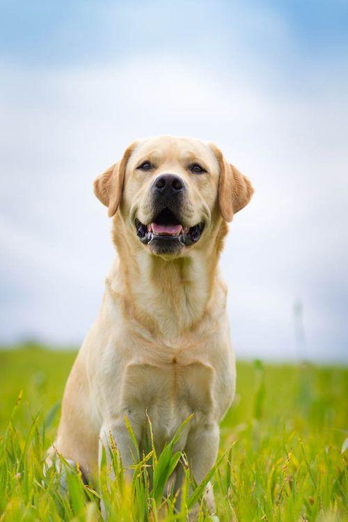 My very favorite breed.