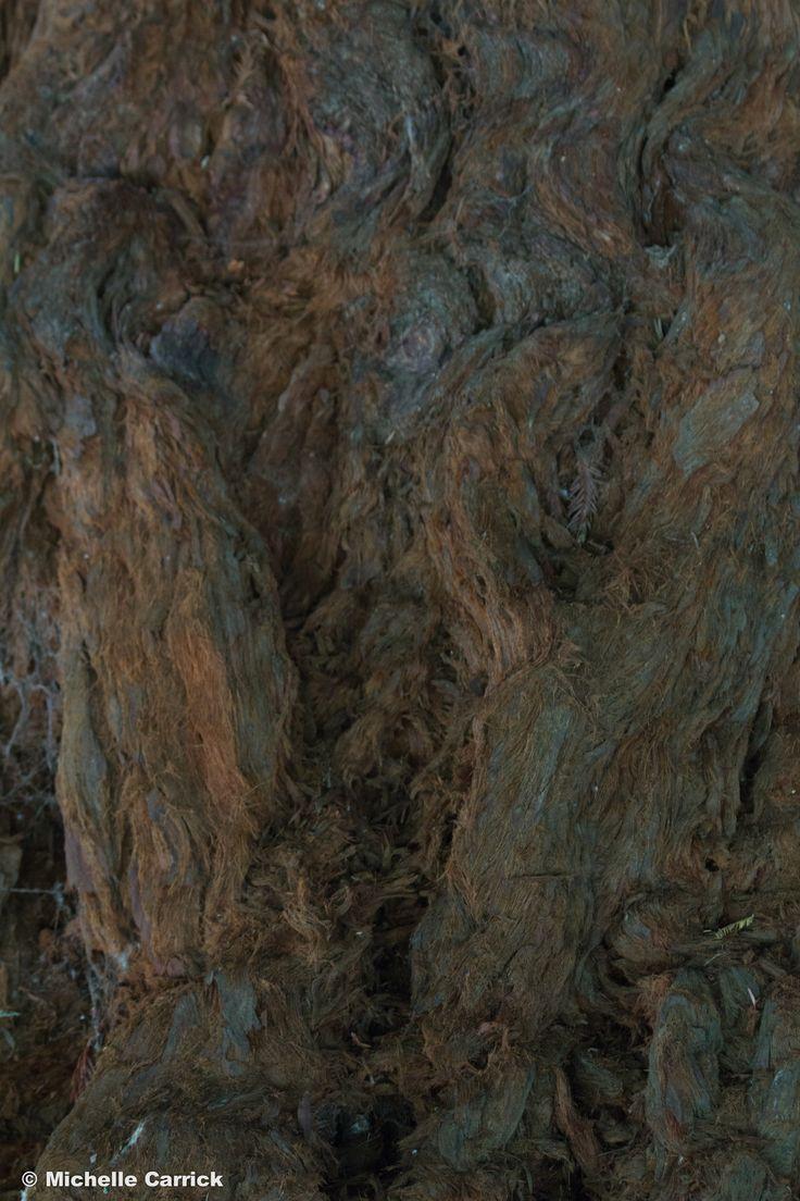 Tree Grain - Maroondah Reservoir Park, Melbourne, Victoria, Australia.